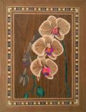 Orchid 25 x 35 cm