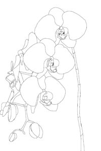 Orchids Figure 02